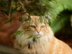 Ourdoor Cat