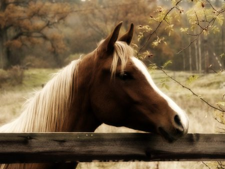 Autumn Horse - autumn, Fall, field, horse, trees, fence