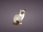 meet grumpy the cat