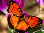 Bright Orange Butterfly F