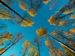 priroda-osen-derevya-nebo