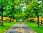 FENCE across the BEAUTIFUL ROAD
