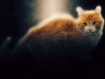 Fire Fox Cat Whatever