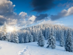 * Winter *