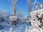 * White winter *