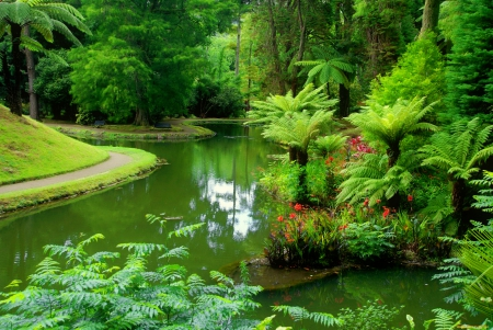 Green Forest Forests Nature Background Wallpapers On