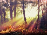misty forest light