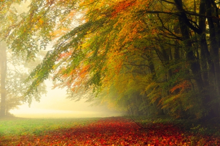 Autumn Artist - forest, fall, lovely, grass, morning view, beautiful, trees, mist, leaves, autumn colors, path