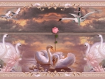 PINK SWANS