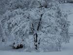 Winters Last Storm