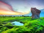 Mossy Rocks At Morning Beach