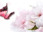 Pink Sakura Butterfly