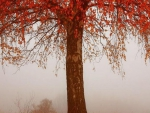 Foggy Autumn