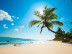 The Sun Shines Through The Palm Tree On A Caribbean Beach