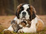 Dog  Bernard and small cats