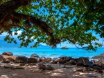 Under The Tree On A Tropical Beach
