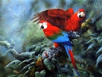 Couple Wing Macaws