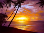 Beach of Paradise