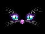 Bright-Eyed Kitten