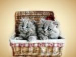 Basket of Love ♥♥ For a Sweet Carmen :)