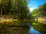 River In The Heart Of Forest
