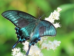 Bright Butterfly