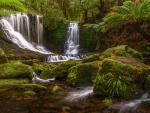 Exotic Jungle Falls