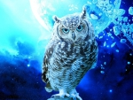 Owl in space