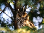 Owl on tree