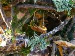 Fairy hammock
