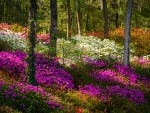 Azalea Flowers And Sunlight Fairytale Forest