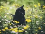 Spring Flowers and Kitten