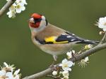 Spring Bird on the Branch