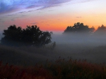 Fog at sunset