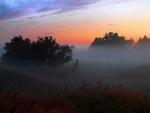 Fog at sunset