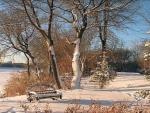 Winnepeg Winter Wickerwork