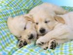 Sleeping on a Blanket