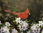 Cardinal in Spring F1