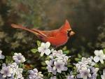 Cardinal in Spring F