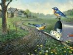 Bluebirds of Spring F1