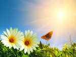 Beauty Under The Sun