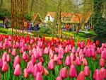 Tulip Park in Netherlands