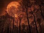 Trees - moon