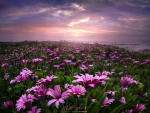 Flowers - sunset