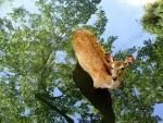 Roe on a tree