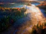 Forest - autumn