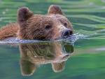 Flowing bear