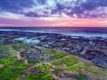 Sea Moss Sunset