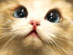 Cute Kitten Face