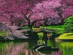 Bridge Under The Blossom Tree